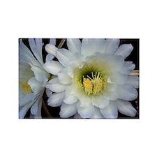 Cactus Flower 4353 Rectangle Magnet