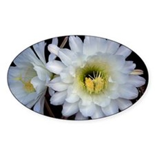 Cactus Flower 4353 Oval Decal