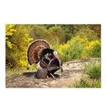 Wild Turkey Gobbler Postcards (Package of 8)