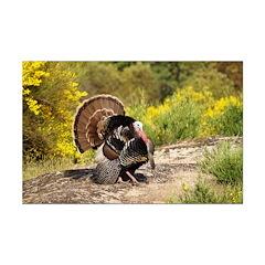 Wild Turkey Gobbler Posters