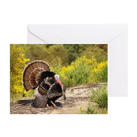Wild Turkey Gobbler Greeting Cards (Pk of 20)