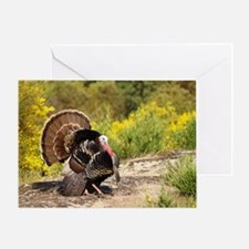 Wild Turkey Gobbler Greeting Card