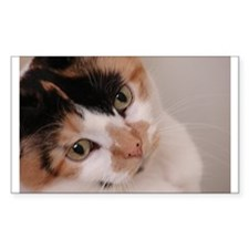 Calico Cat Rectangle Decal