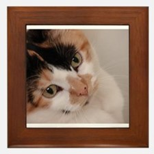 Calico Cat Framed Tile