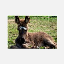 Sleepy Donkey Baby Rectangle Magnet