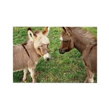 Two Baby Donkeys Rectangle Magnet