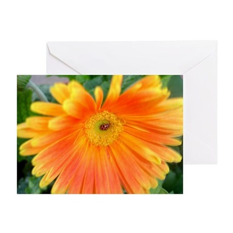 Lady Luck Bug - Greeting Cards (Pk of 10)