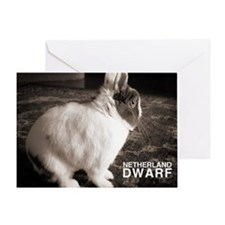 Netherland Dwarf Greeting Card