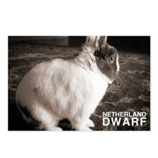 Netherland Dwarf Postcards (Package of 8)