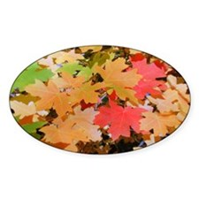 Fall Colors Leaves Oval Decal
