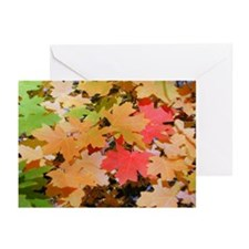 Fall Colors Leaves Greeting Cards (Pk of 10)