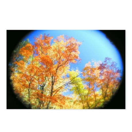 Fall Colors Tree View Postcards (Package of 8)