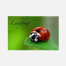 Red Lady Bug Rectangle Magnet