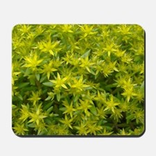 Yellow Creeping Sedum Mousepad