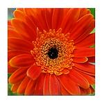 Orange Gerbera Daisy Tile Coaster