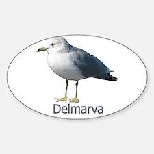 Delmarva Gull Logo Oval Decal