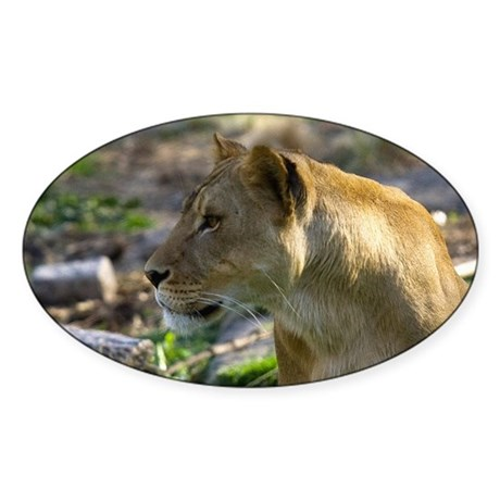 Lioness Looking Left Oval Sticker