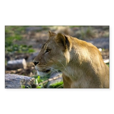 Lioness Looking Left Rectangle Sticker