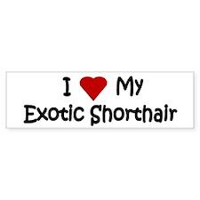 Exotic Shorthair Bumper Bumper Sticker