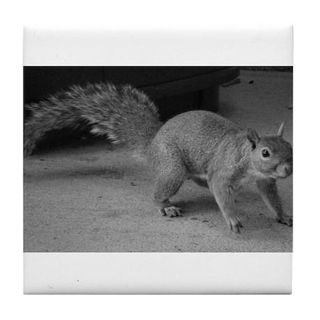 Squirrel Close Up Tile Coaster
