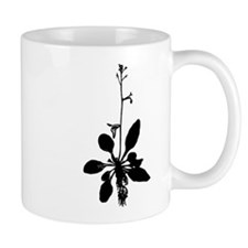 arabidopsis-thalianaBWmug Mugs