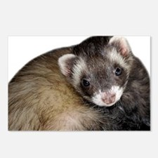 Cute Ferret Face Postcards (Package of 8)