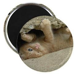 Orange Tabby Kitten 2.25