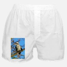 Kookaburra In Gum Tree Boxer Shorts