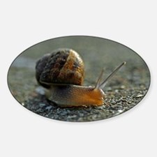 Snail 1 Oval Decal