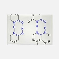 2-Pyridone Chemical Basepair Rectangle Magnet