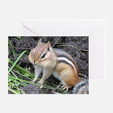 Cheeky Chipmunk Greeting Cards (Pk of 10)