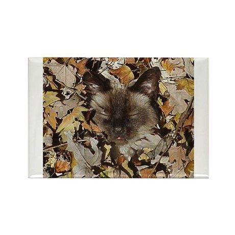 Siamese Kitty Rectangle Magnet (10 pack)
