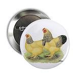 Buff Brahma Pair Button