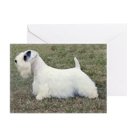 Sealyham Percy Greeting Cards (Pk of 20)