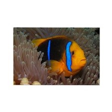 Cute Clown Fish Rectangle Magnet