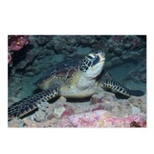 Sea Turtle at the Bottom Postcards (Package of 8)