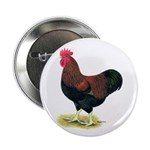 "Partridge Rock Rooster 2.25"" Button"