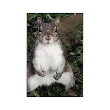 Pretty Please Squirrel Rectangle Magnet