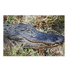 Cute Alligators Postcards (Package of 8)