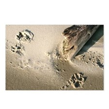 pawprints Postcards (Package of 8)