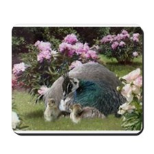 Peacock Hen and Chicks Mousepad