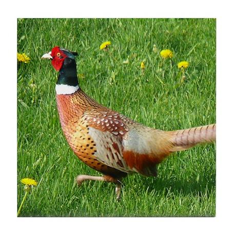 Ring-necked Pheasant Tile Coaster