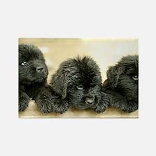 Big Black Dog Rectangle Magnet (100 pack)