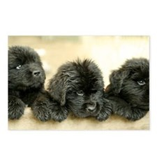 Big Black Dog Postcards (Package of 8)
