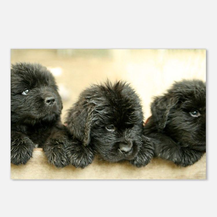 Big Black Dog Postcards (Package of 8)