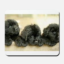 Big Black Dog Mousepad