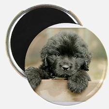 Big Black Dog Magnet