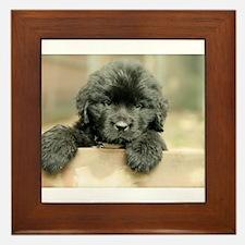 Big Black Dog Framed Tile