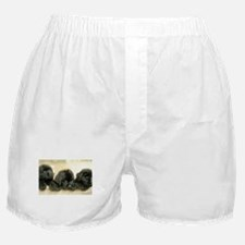 Big Black Dog Boxer Shorts