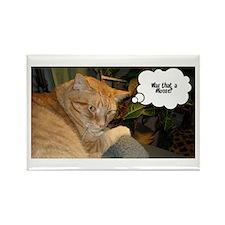Orange Tabby Cat Humor Rectangle Magnet (10 pack)